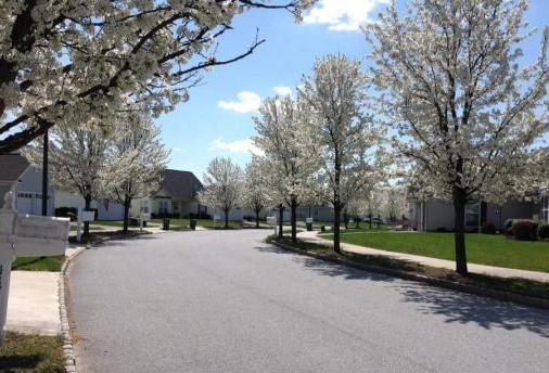 One of our streets in its spring glory